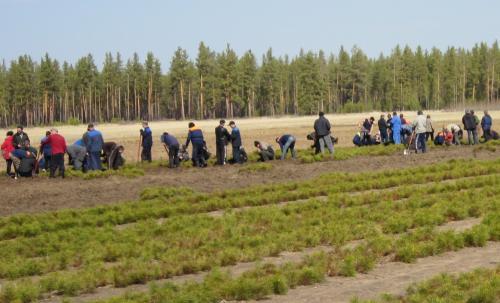 фотографии ключевской лесхоз алтайского края