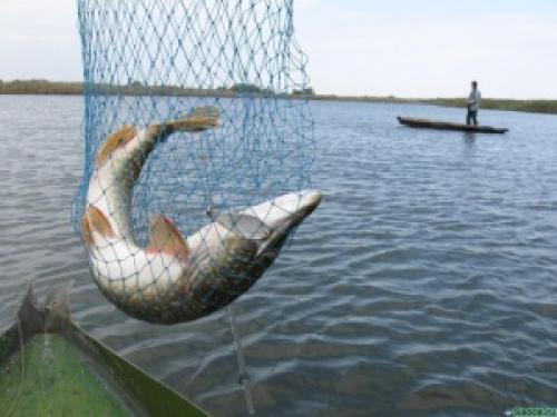 рыбалка в елунино алтайский край