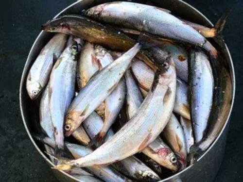 запреты на рыбалку на байкале