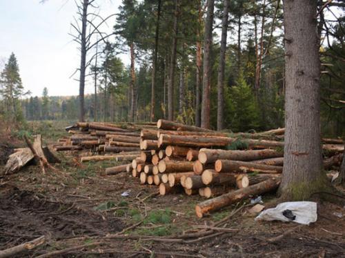 осуществляем в батурино вырубили лес самого рождения православный