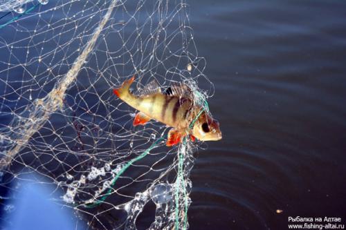 рыбалка жаберной сетью