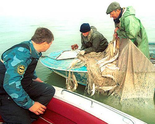 какой штраф за ловлю рыбы сетями в краснодарском крае