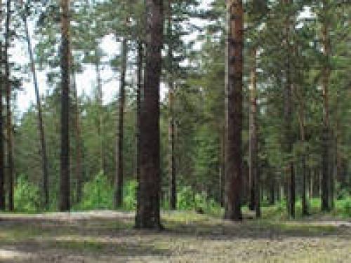 предложений продаю землю панкрушихинский район александр Книгу Рекордов