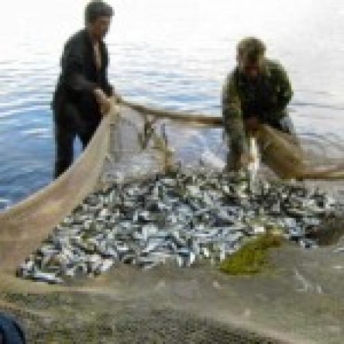 рыболовная сеть бурятия