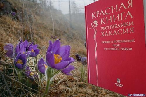 Цветы хакасии занесённые в красную книгу растения красной книги