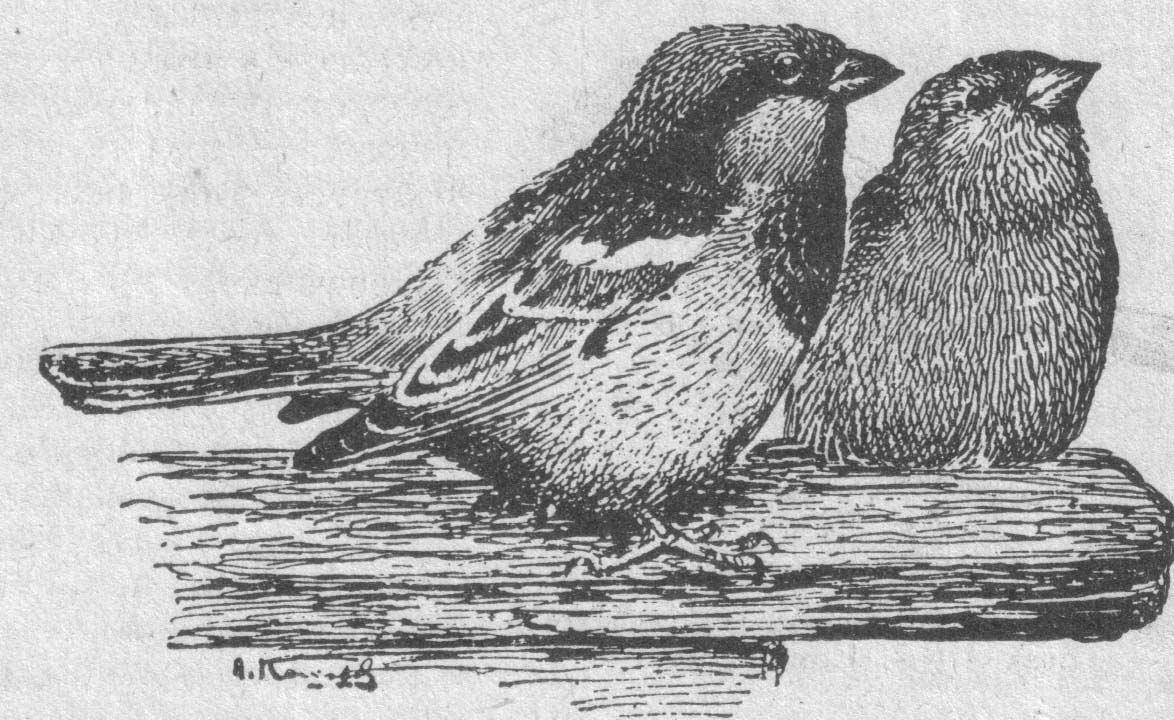 Птицы алтайского края зимой фото